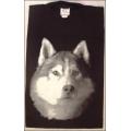 """T-Shirt mit Druck """"Husky Kopf"""", Gr. M"""